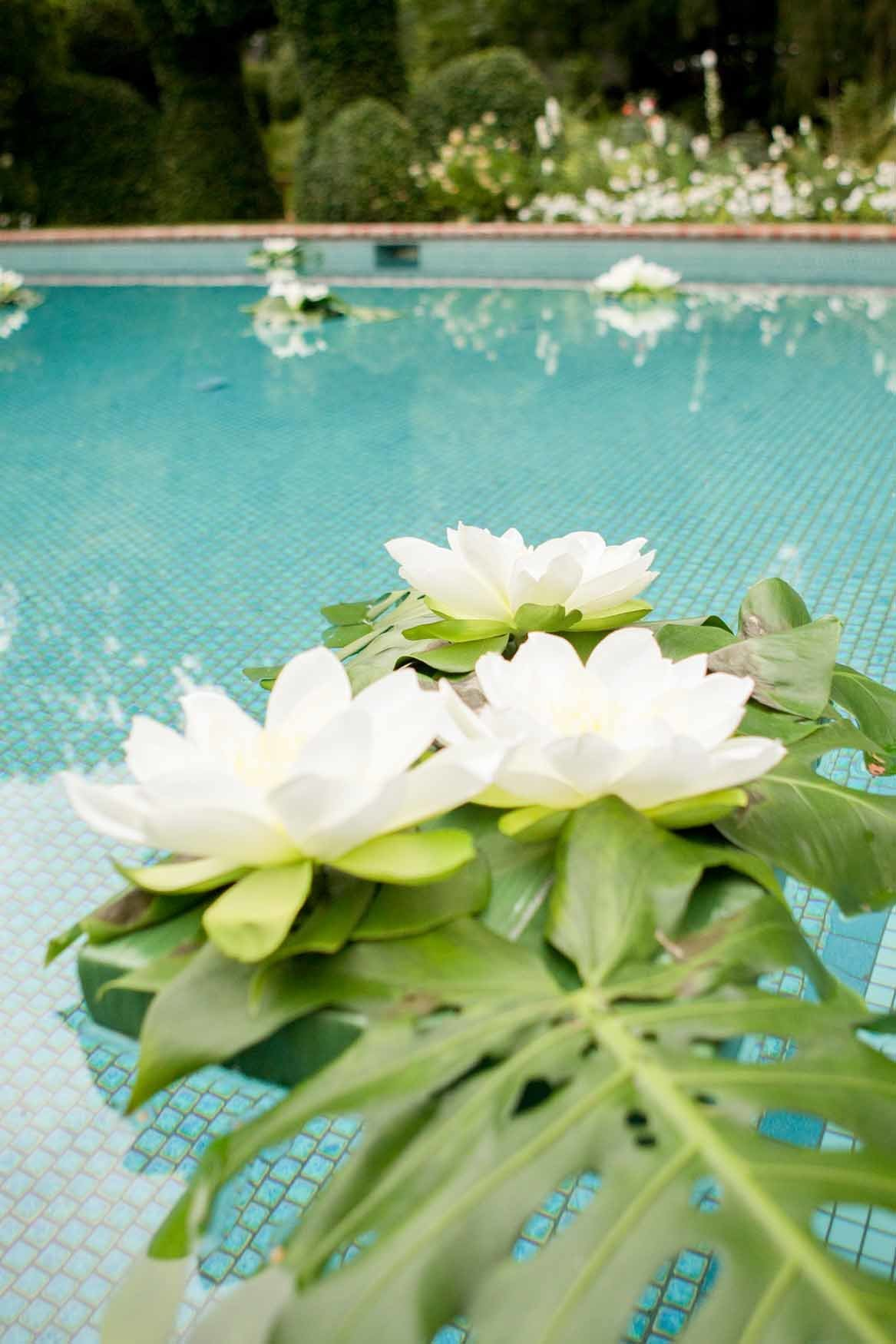 White lotus and monstera clusters floating in a pool