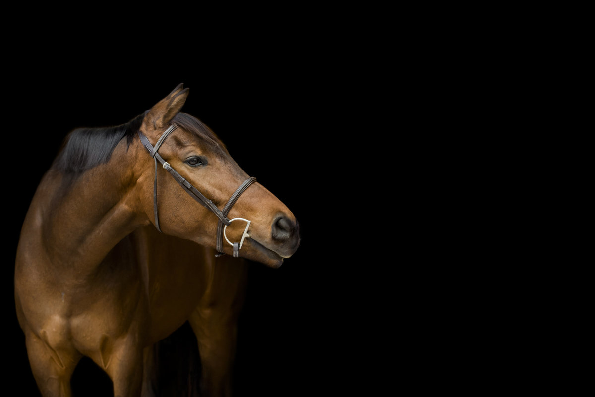 Lindberg_Equine_Photographer_Texas