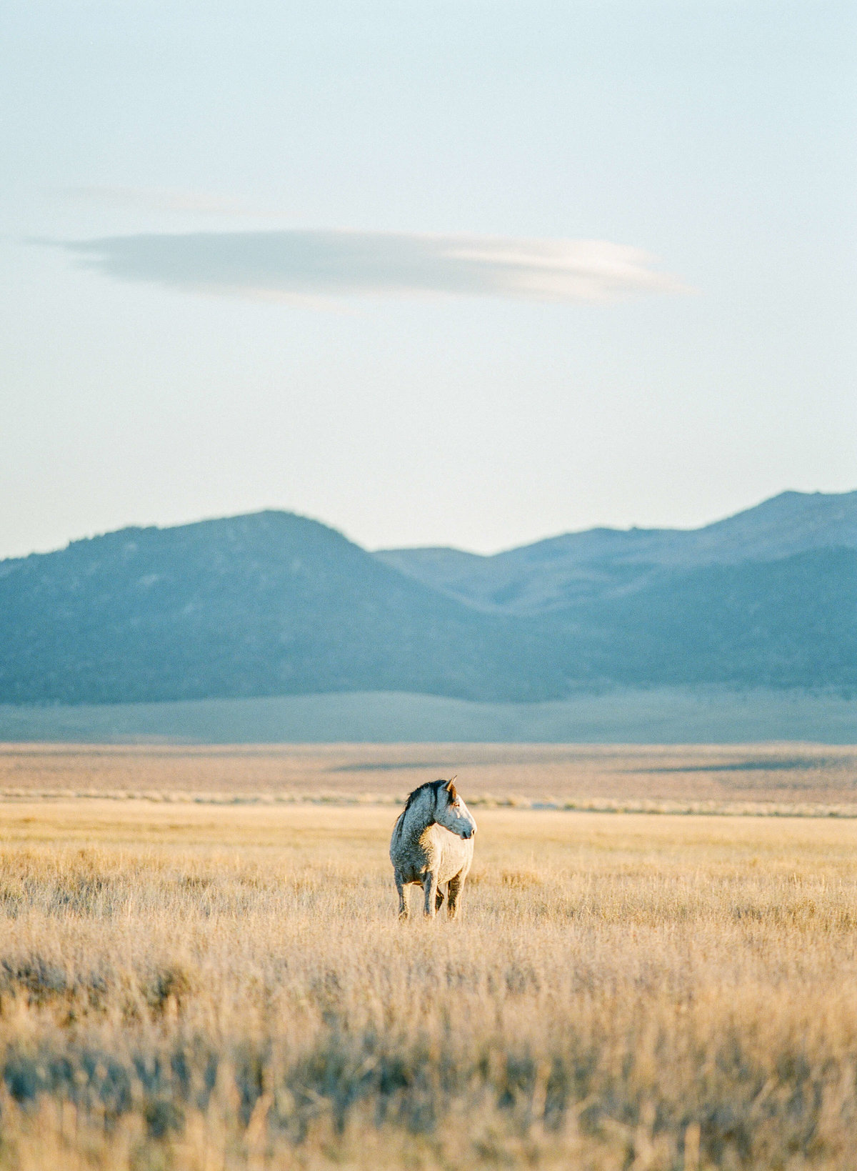 26-KTMerry-wild-mustang-nevada