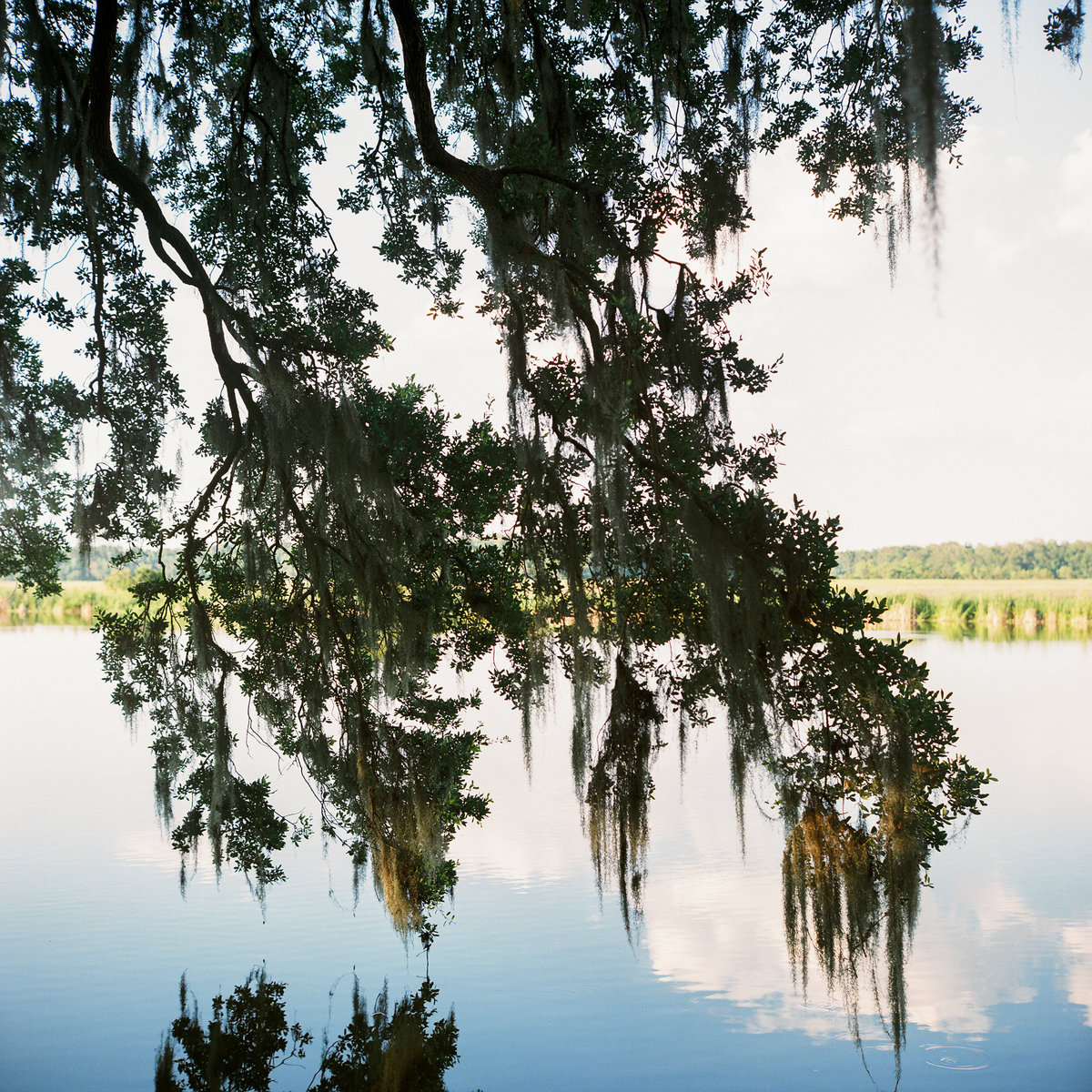 charleston-wedding-venues-middleton-place-philip-casey-photography-048