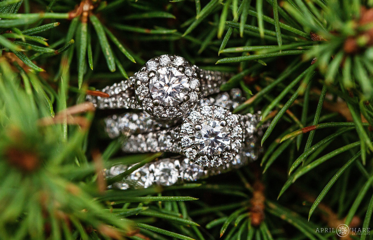 Two Diamond Halo Engagement Rings nestled in Pine Needles in Golden Colorado Same Sex Wedding Photographer at Lesbian Wedding