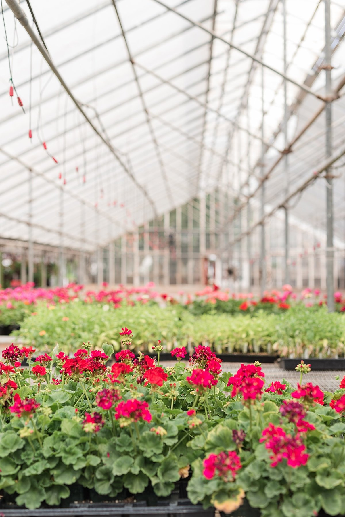 An Edwards Greenhouse and BSU Engagement Session-21