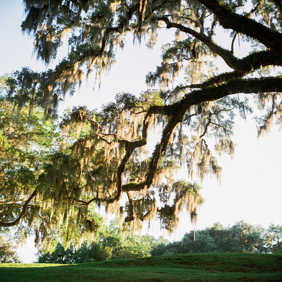 charleston-wedding-venues-middleton-place-philip-casey-photography-047