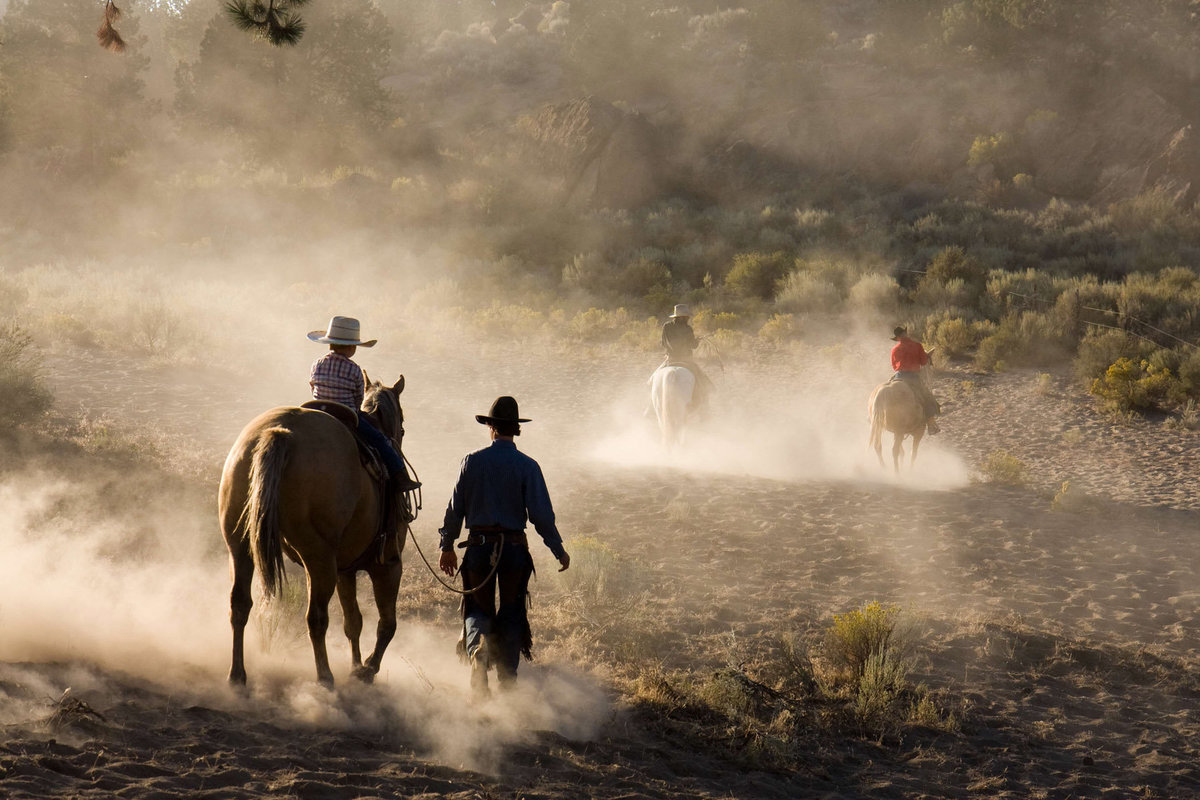 horses and cowboy photographer  Lynette Smith Photography