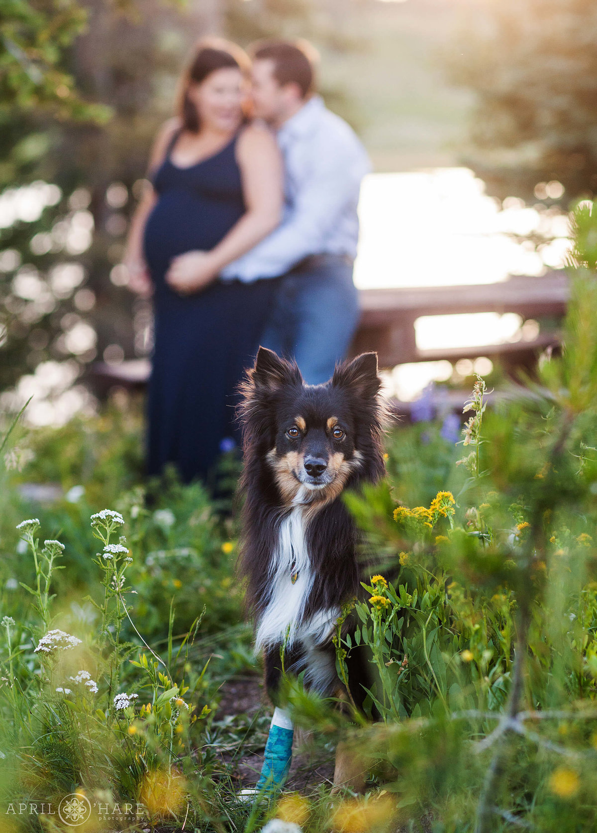 Doggie Photo at Colorado Maternity Photography Session in Steamboat Springs