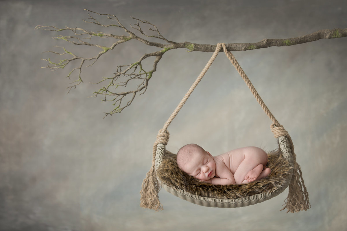 Baby hanging from a tree branch