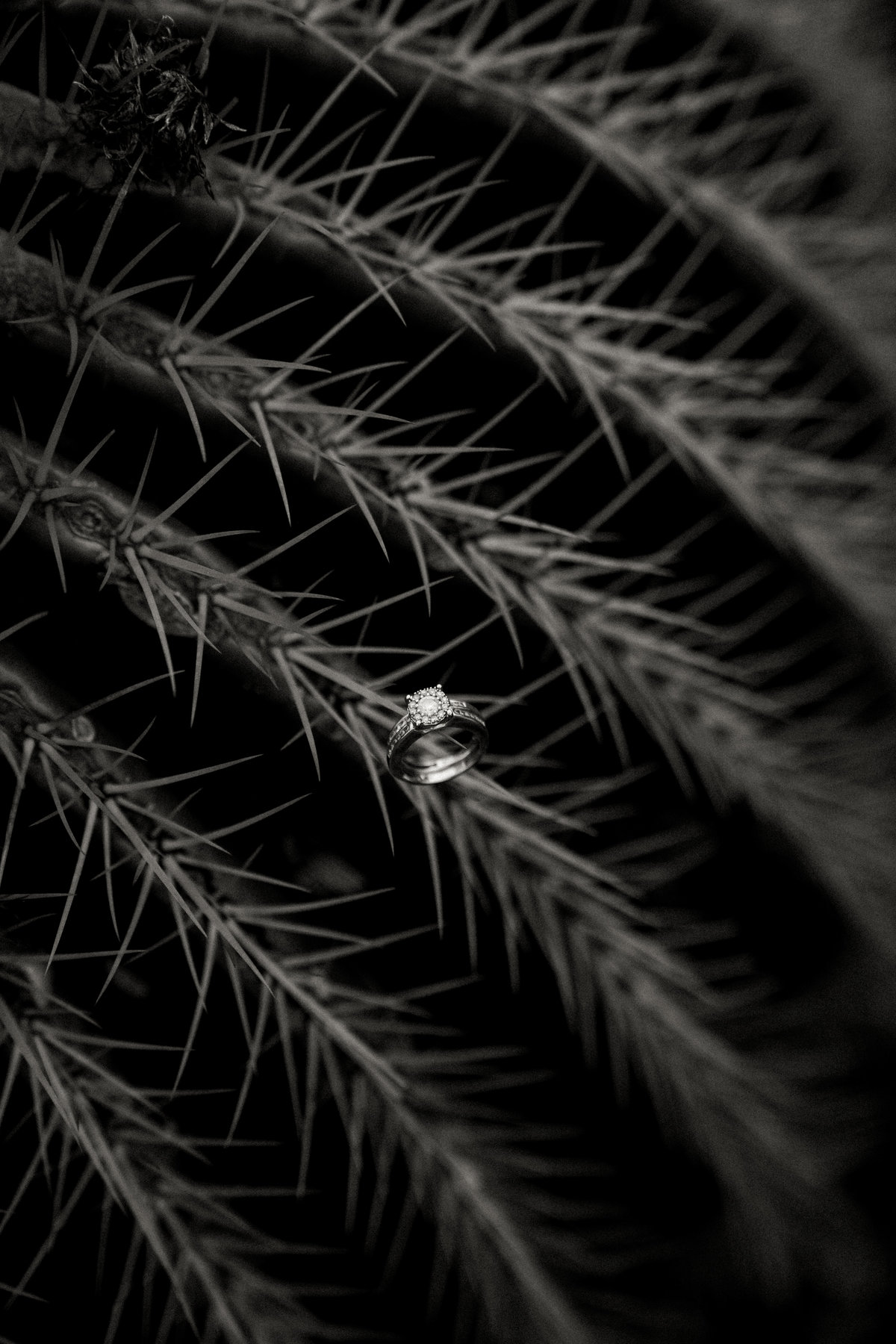 cactus-botanical-garden-hawaii-elopement-sydney-and-ryan-photography-126
