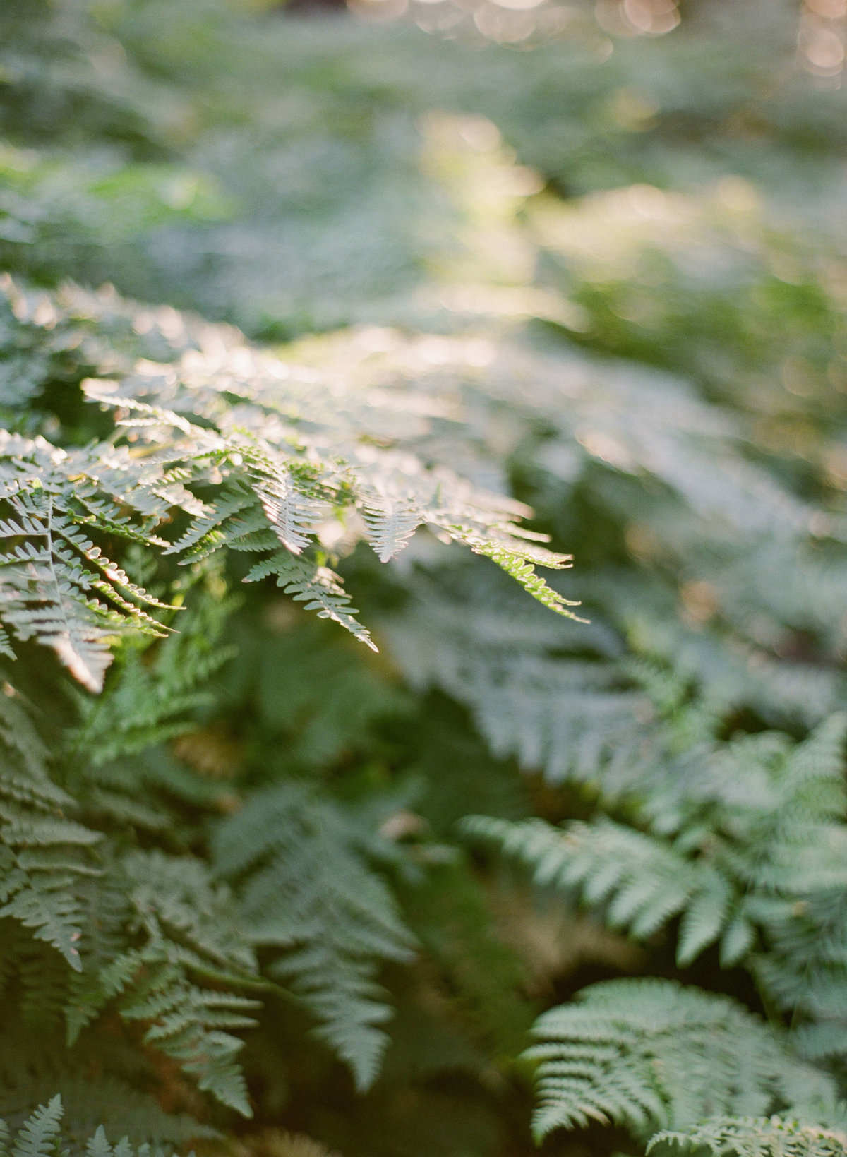 57-KTMerry-travel-photography-nature-Yosemite-fern
