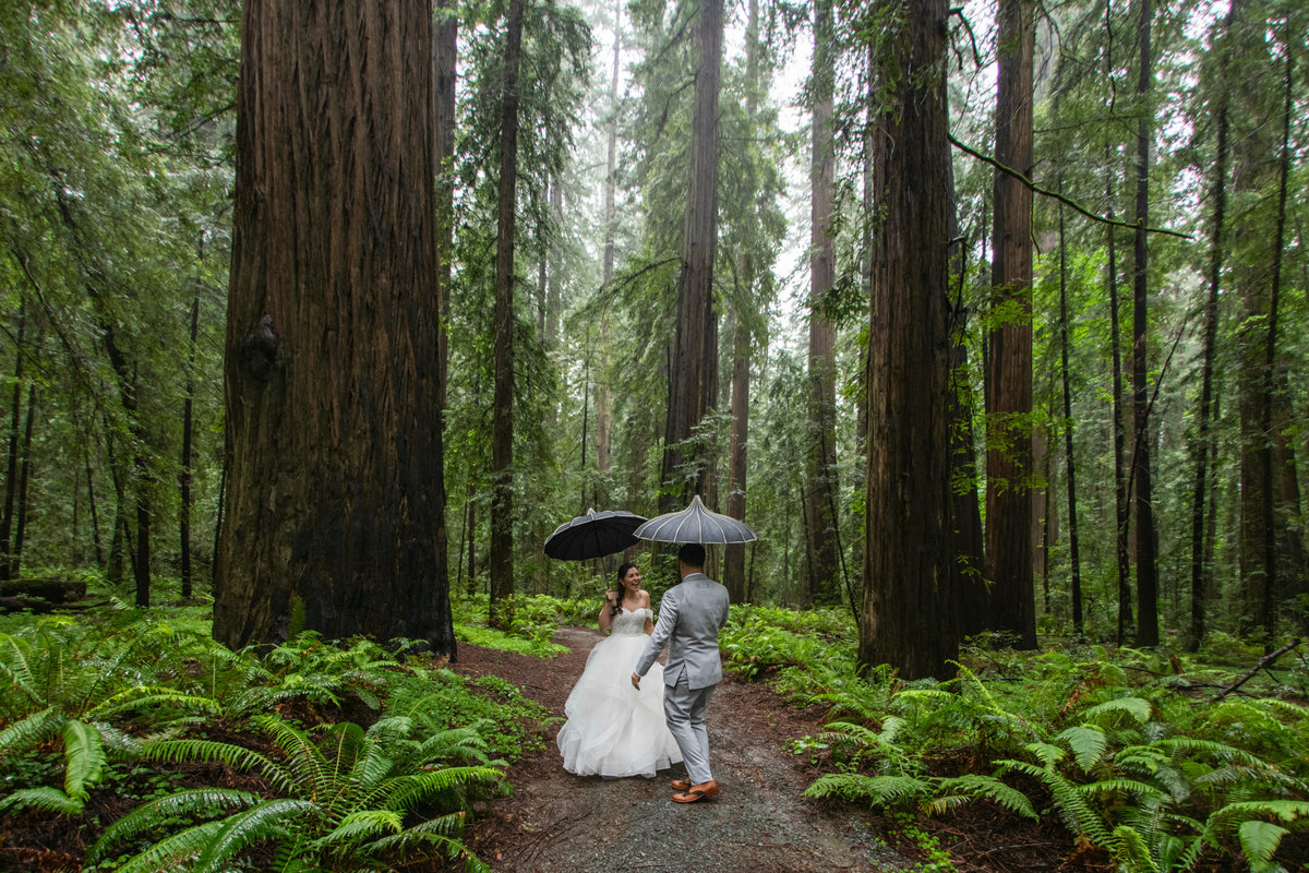 Redway-California-wedding-photographer-Parky's-Pics-Photography-Humboldt-County-Photographer-Avenue-of-the-Giants-First-look-in-the-redwoods-wedding-1.jpg