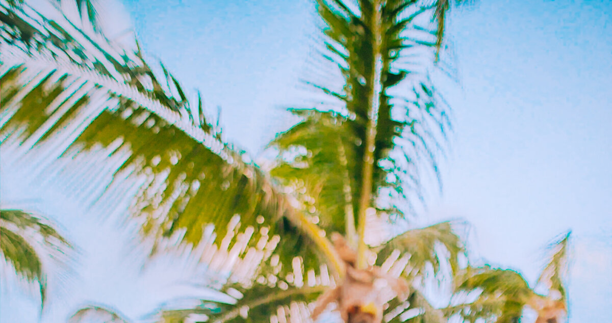 Palm-trees-kellyyhill
