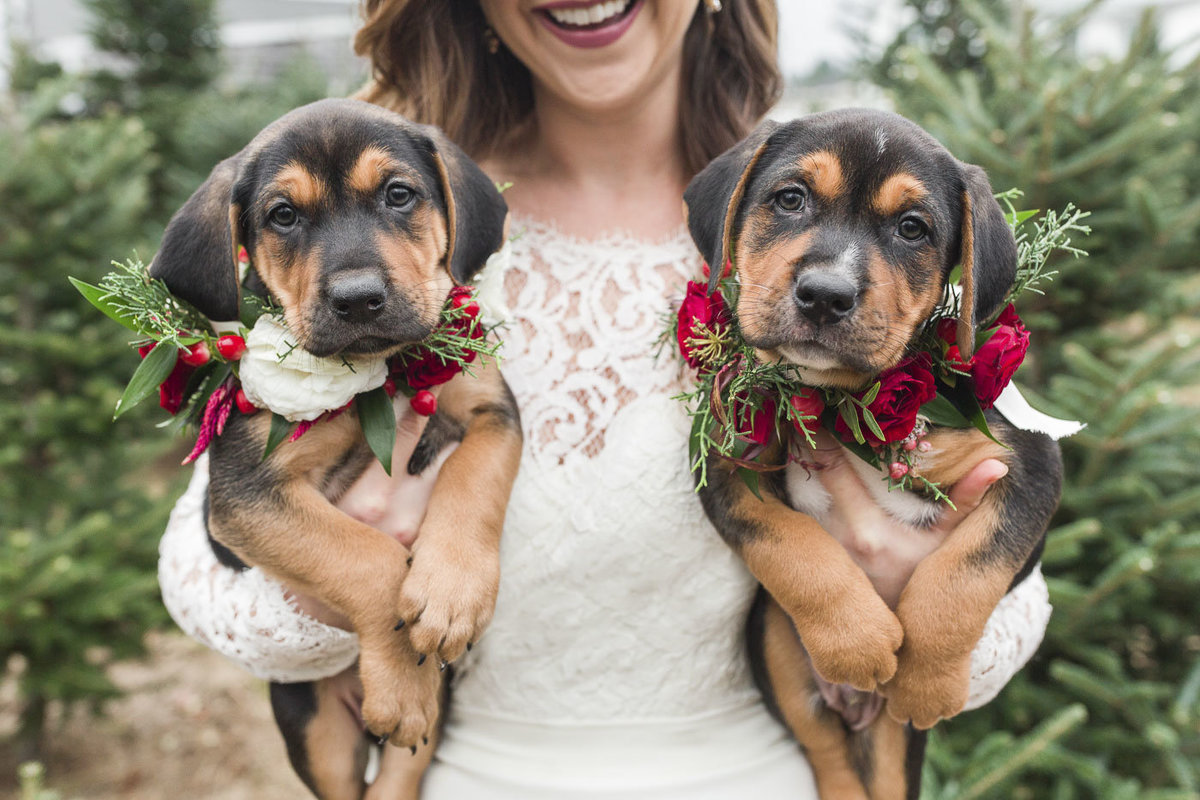 Bride holding two adoptable puppies in Christmas Tree Farm