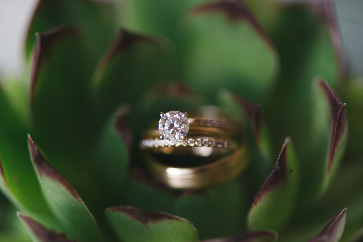 gold wedding rings in succulent plant