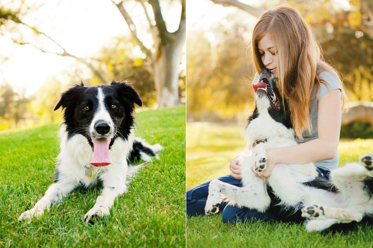 San-Diego-Pet-Family-Photographer-Ali-Peterson-Photography_0010