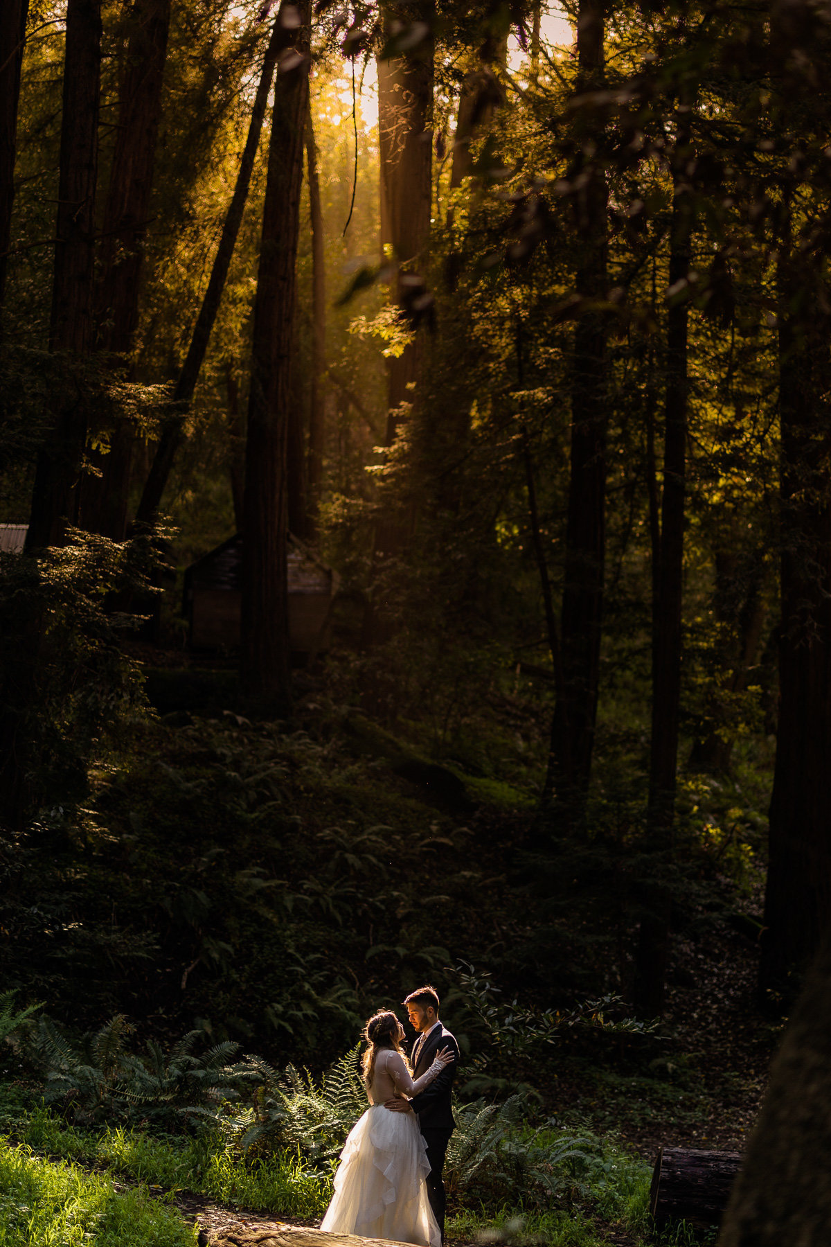Bride & groom embrace in the Redwood Forest before their Big Sur wedding while a golden ray of sunlight shines on them.