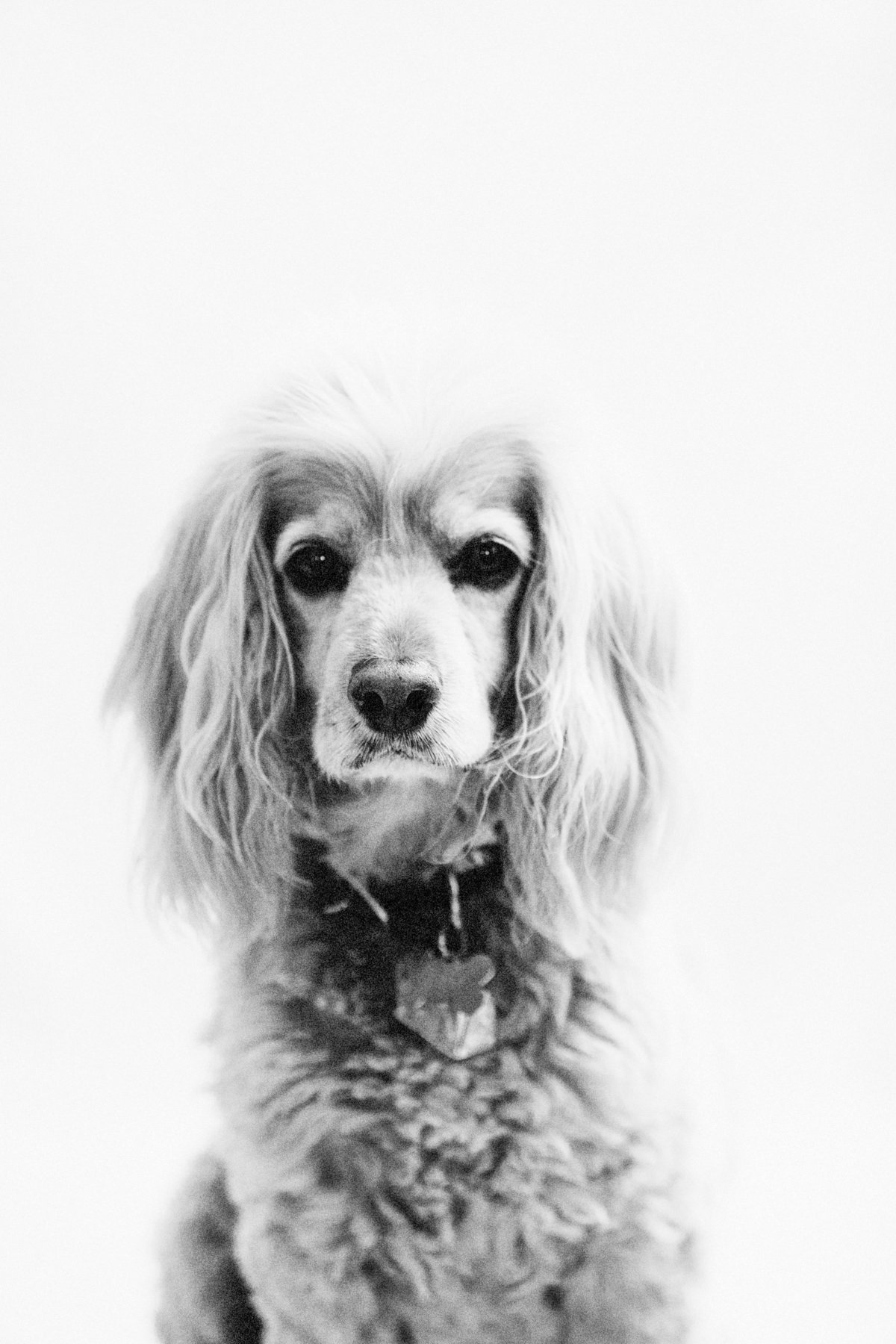 santa-barbara-southern-california-pet-animal-photographer-001