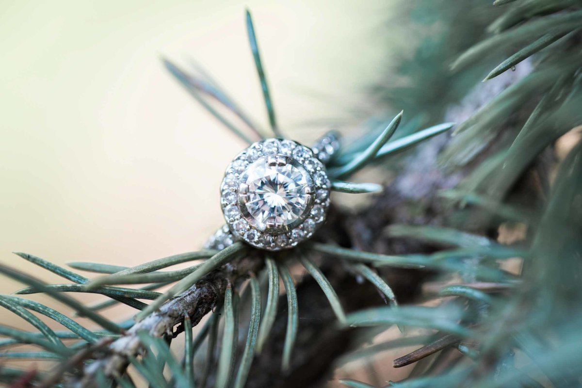 Engagement ring hanging on blue spruce branch