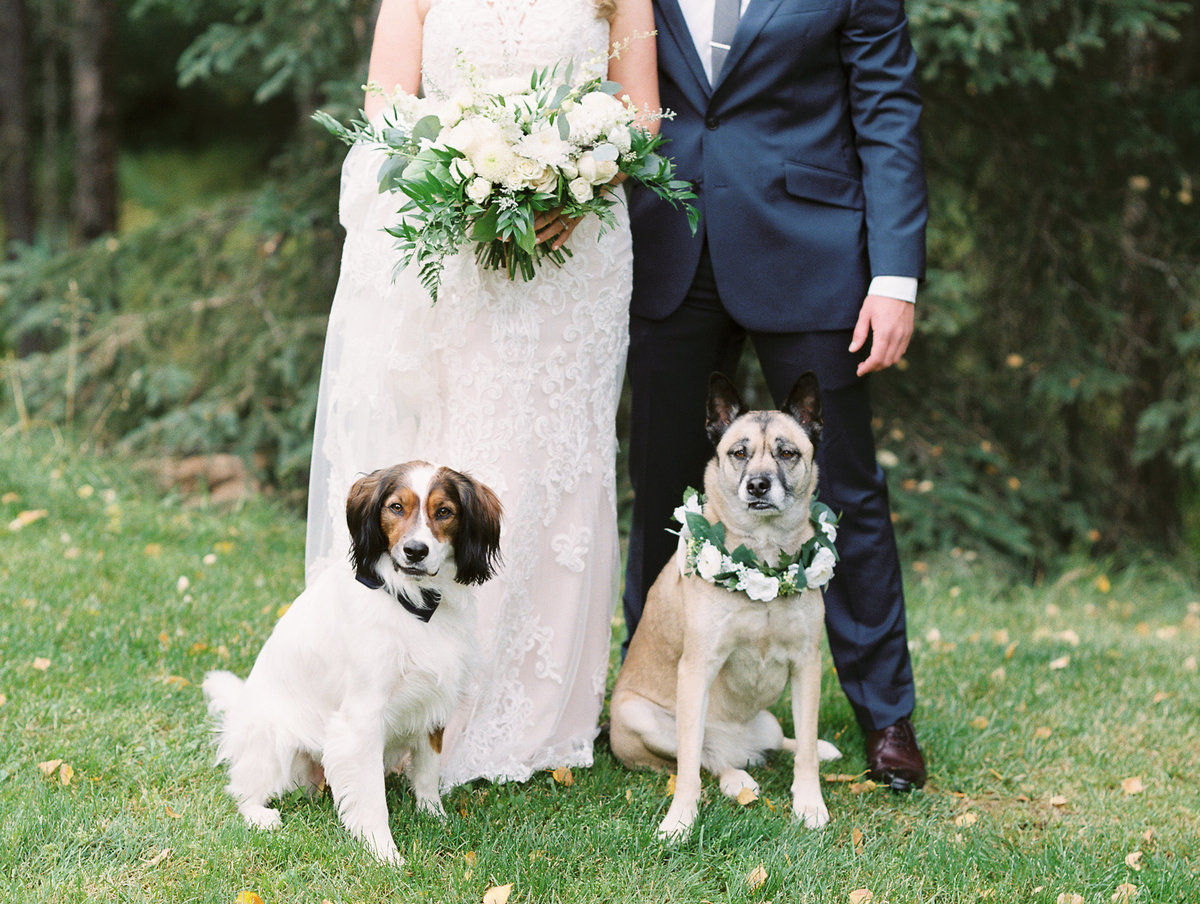 Alaska wedding with dogs