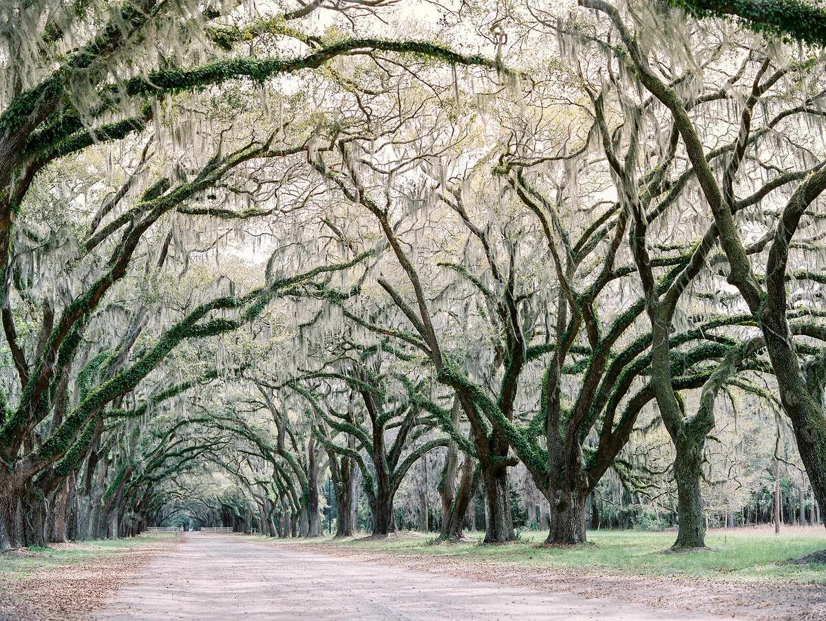 Wedding Wormsloe Historic Tara Skinner Planner (15)