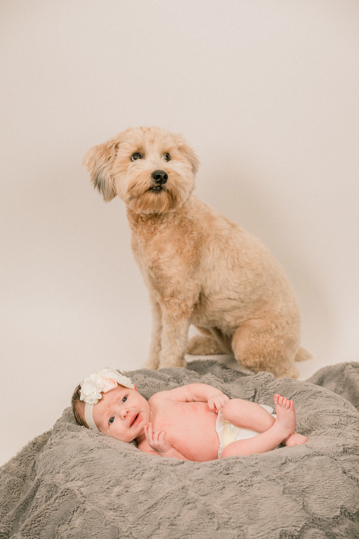 Newborn Photos With Dog Family Photography Orange County_