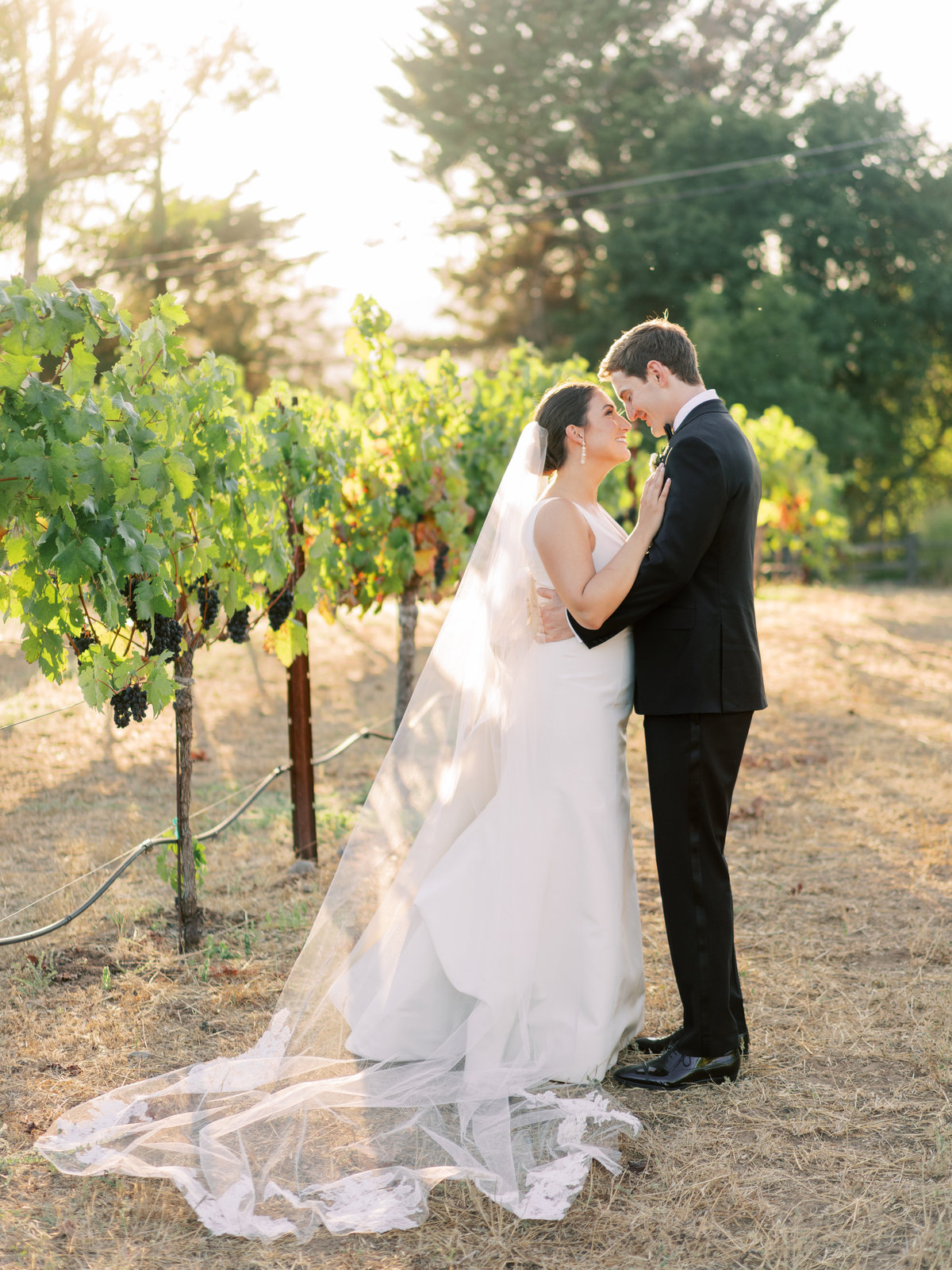 Kelsey + Alex Sonoma Buena Vista Winery Wedding - Cassie Valente Photography 0162