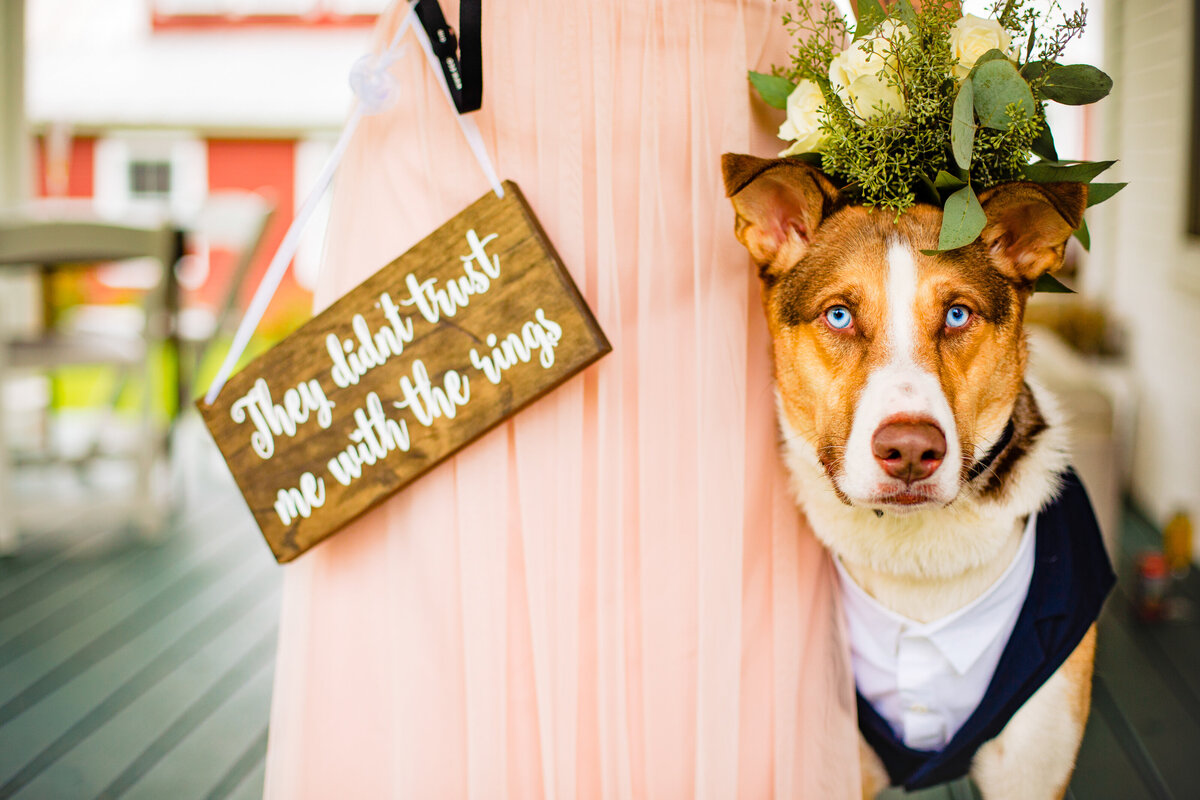 wedding-with-dogs-dog-tuxedo-vermont-wedding-photography-andy-madea-photography