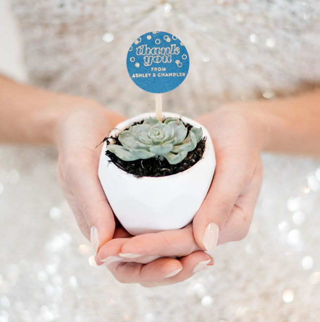 mini succulent wedding favor