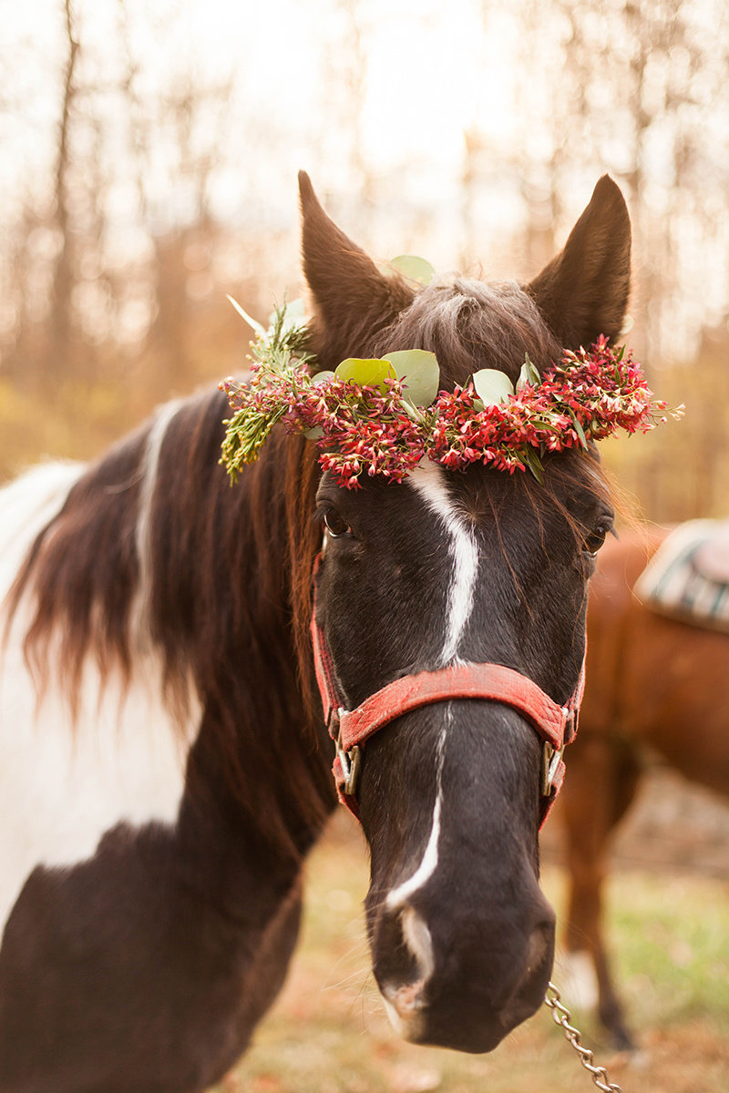 Christmas-horse-styled-shoot-187