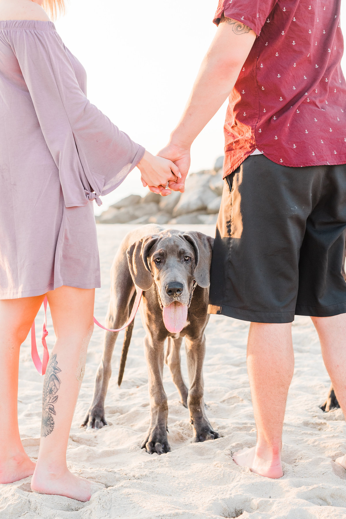 hampton roads dog photographer-16