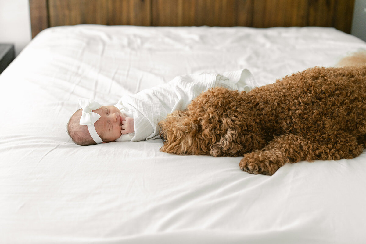 in home newborn and dog