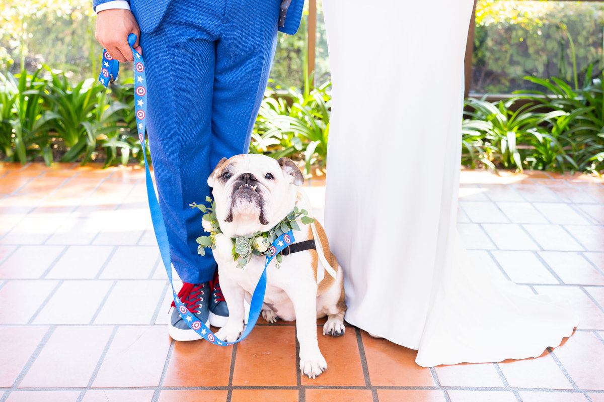 Bride-Groom-with-Dog-at-Wedding