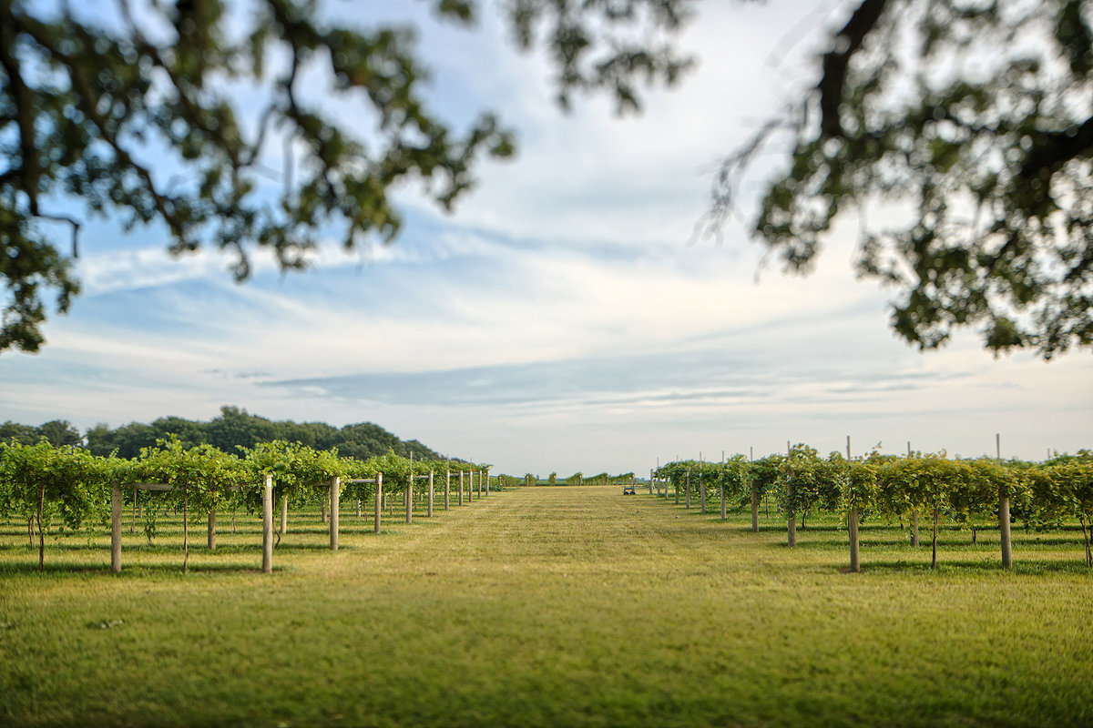 mceachran winery and vineyard in caledonia illinois
