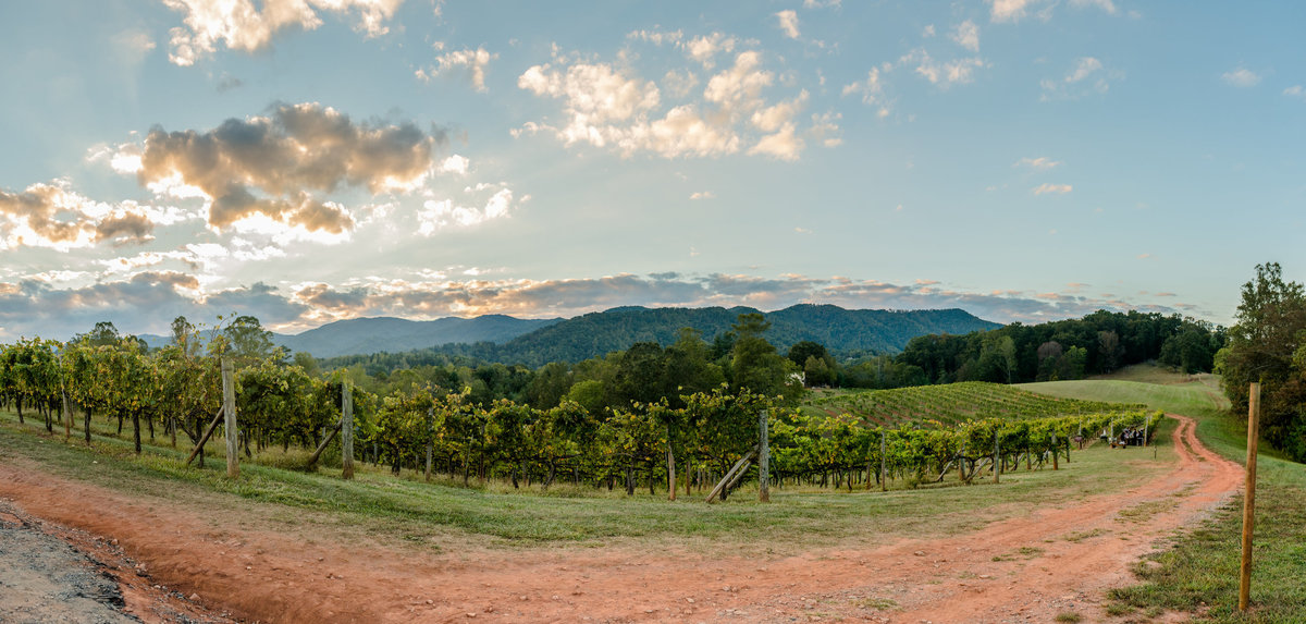 mountainside vineyard
