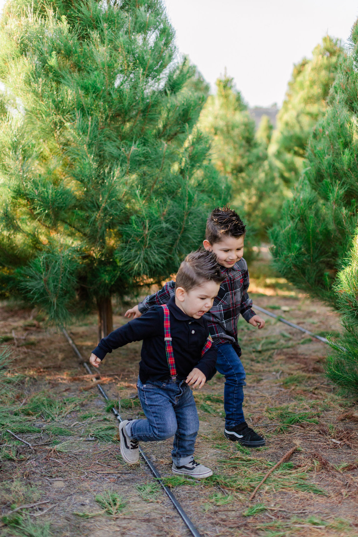 Xmas Photography, Rye Farm Christmas Tree, Family Photography S&V-20