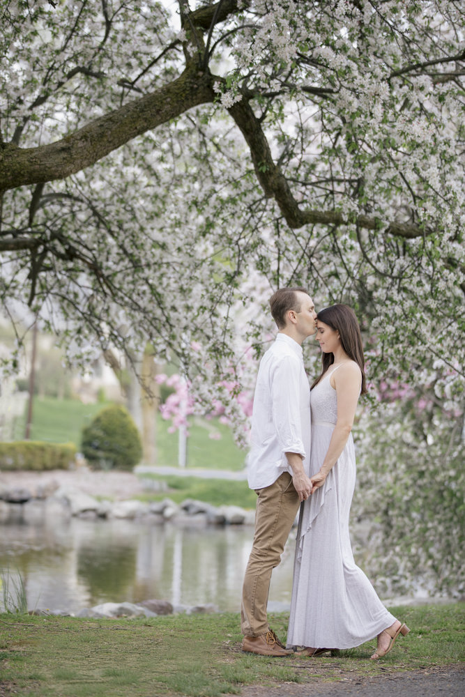 engaged couple kiss by cherry blossoms at westfield park