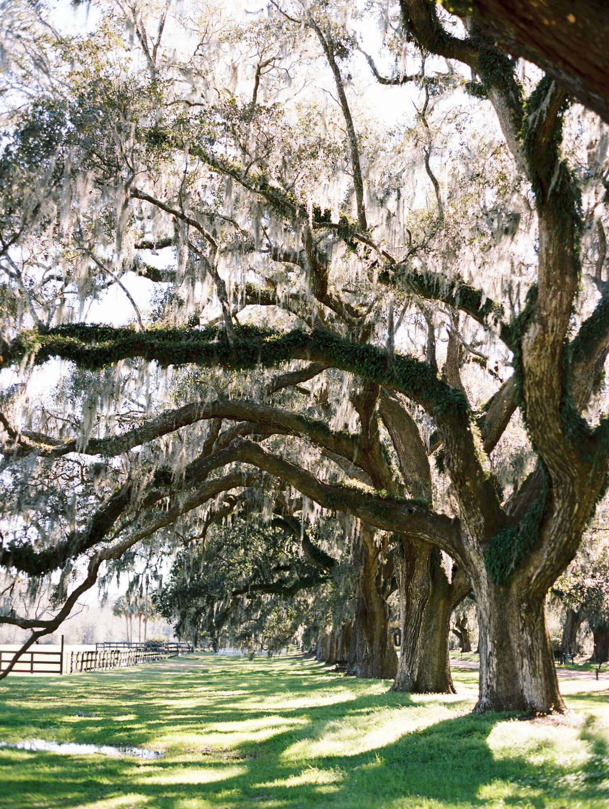 boone-hall-plantation-wedding-charleston-philip-casey-02