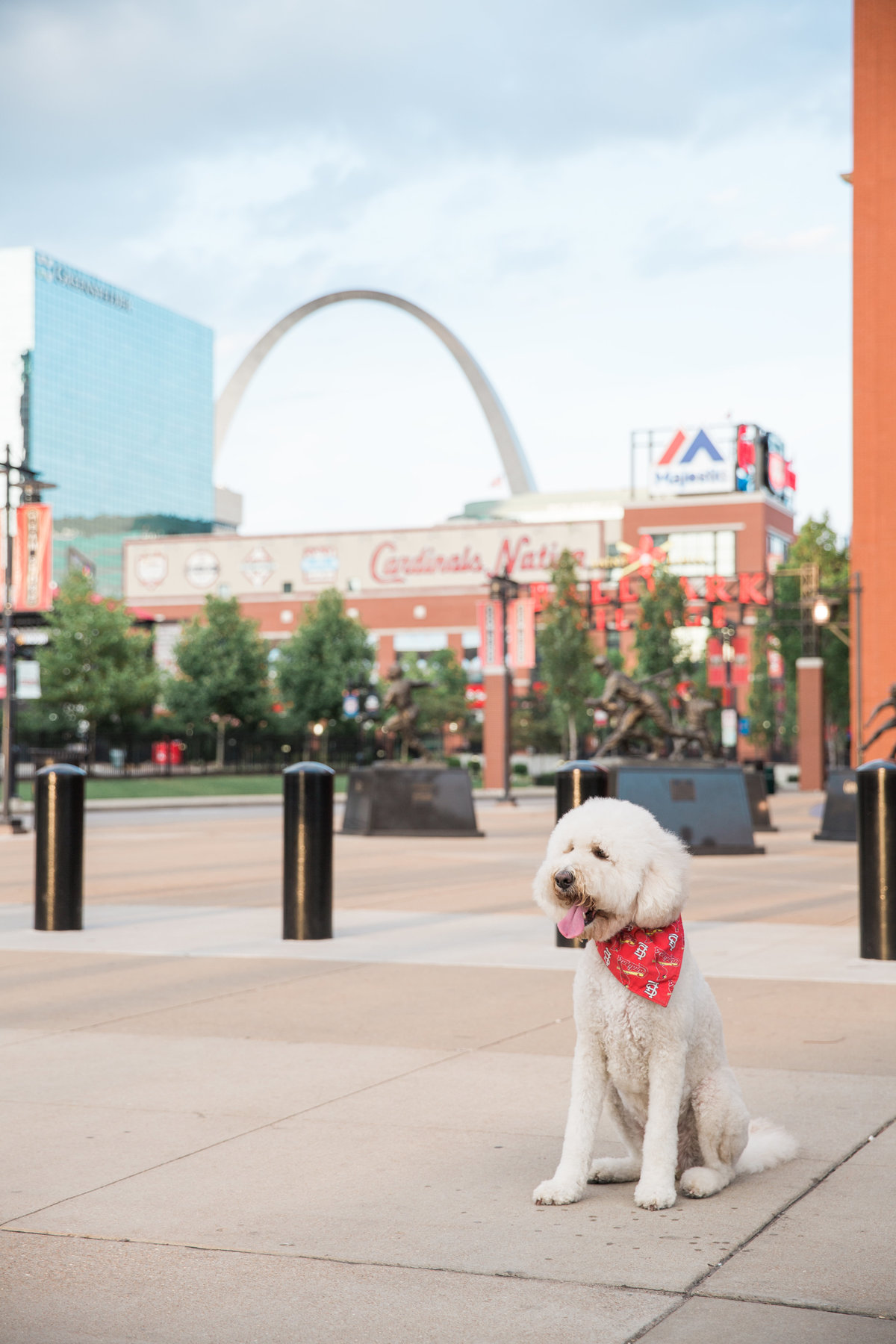 St. Louis Dog Photographer