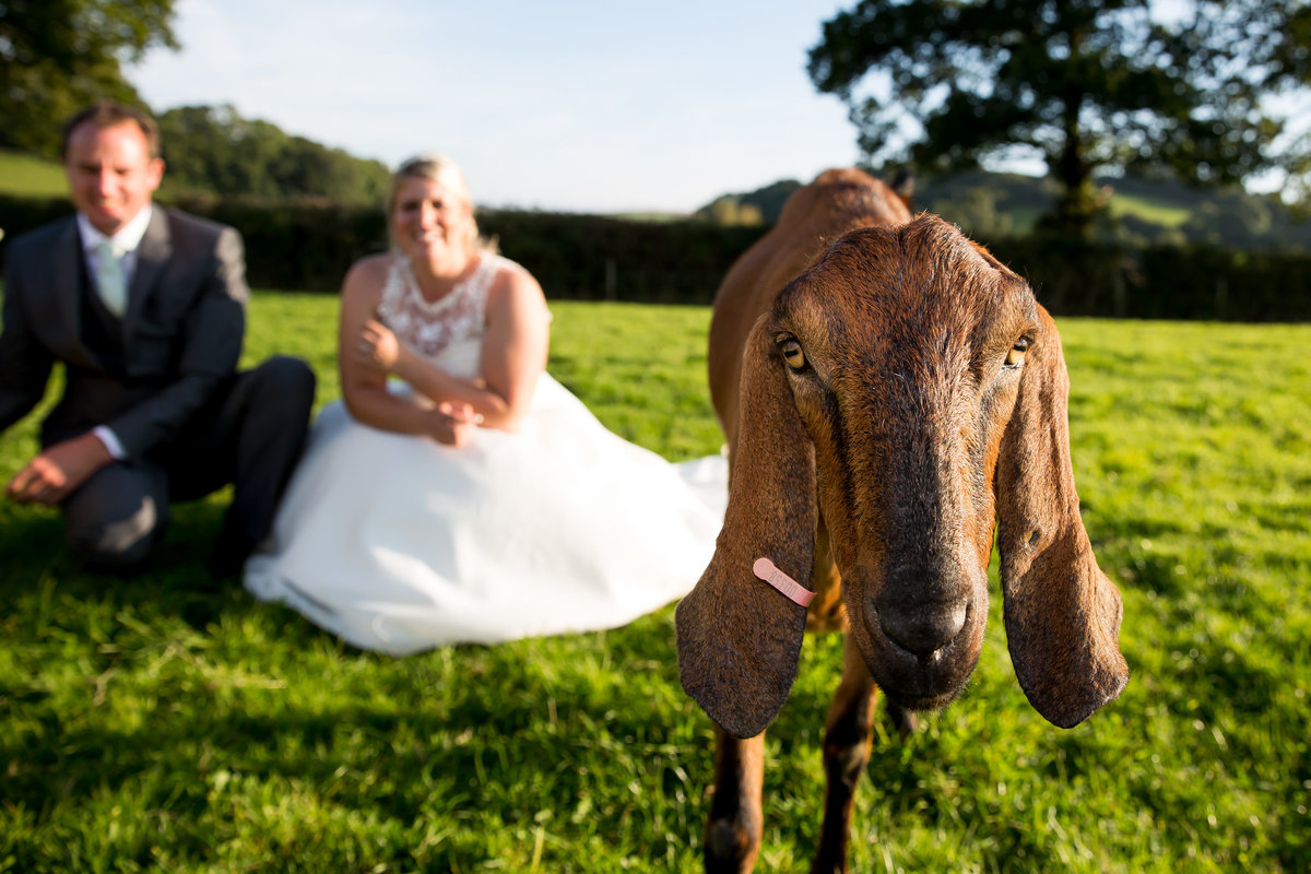fun dartmoor wedding photography in devon