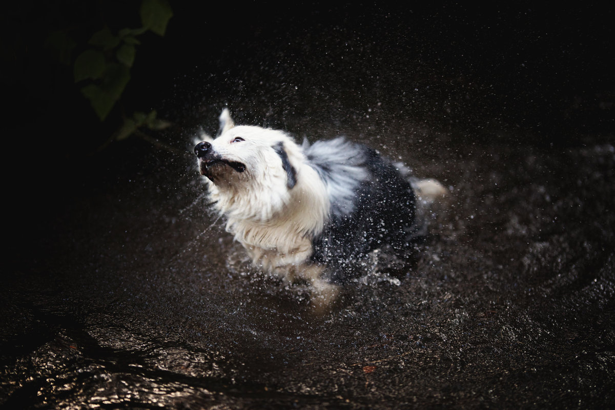 Dog shaking in water South australia pet photographer