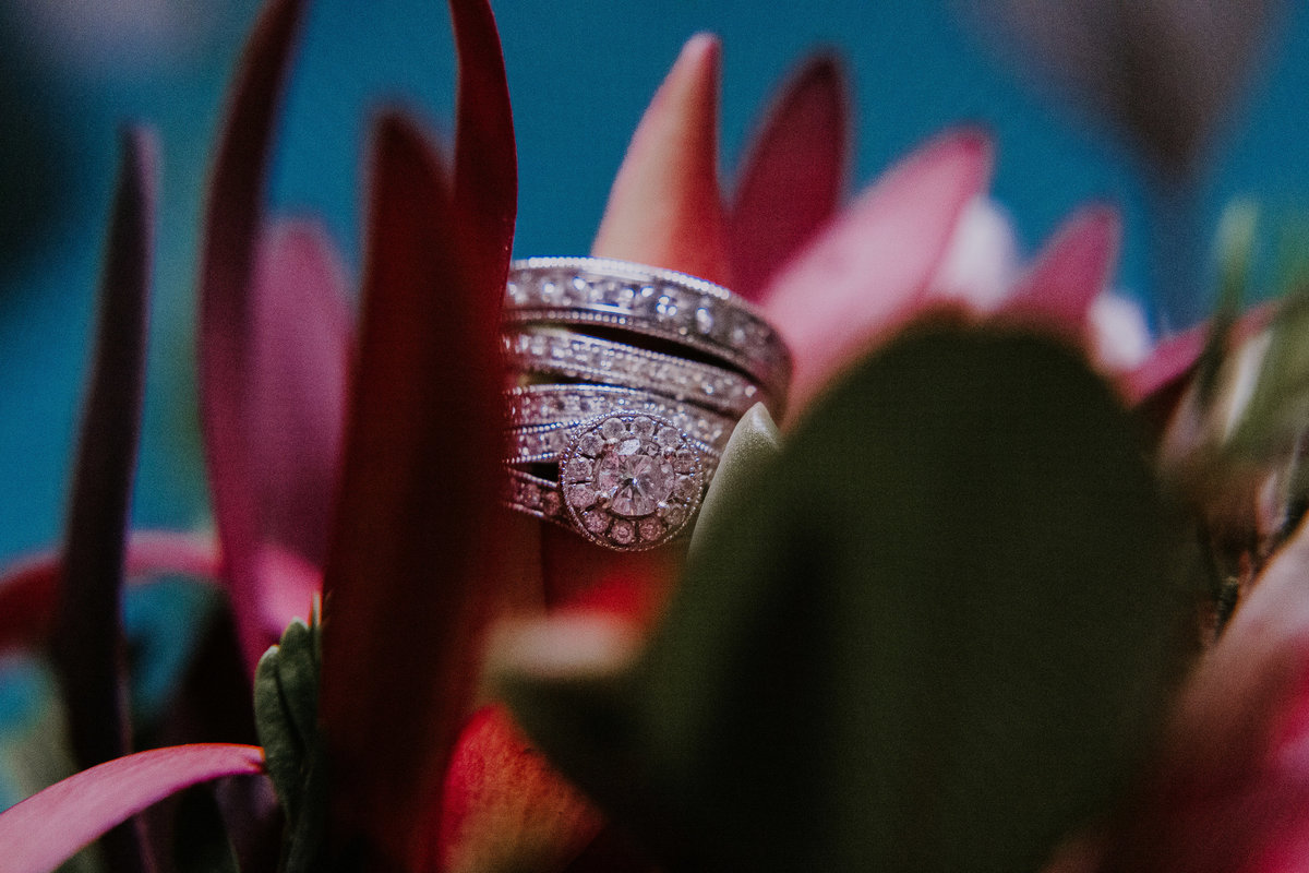 Lake Tahoe elopement photographers rings sit in pink flowers
