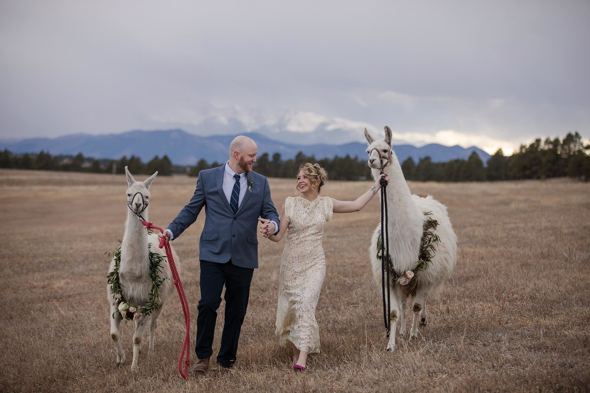 Llama Younger Ranch Wedding