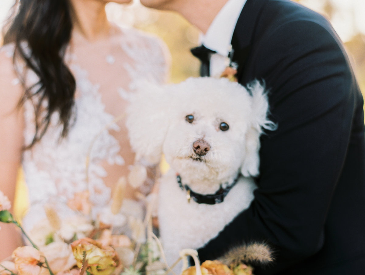 natalie bray photography, rancho santa fe wedding, santa barbara wedding photographer -12