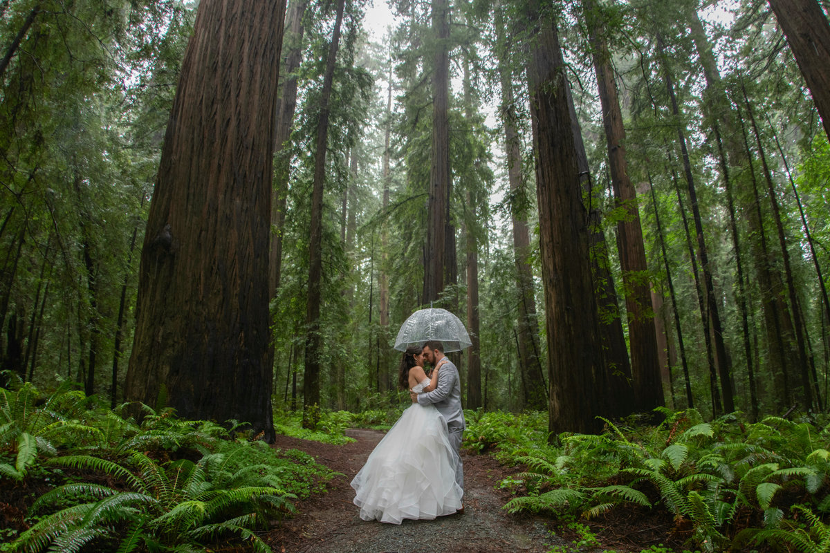 Redway-California-wedding-photographer-Parky's-Pics-Photography-Humboldt-County-Photographer-Avenue-of-the-Giants-First-look-in-the-redwoods-wedding-2.jpg