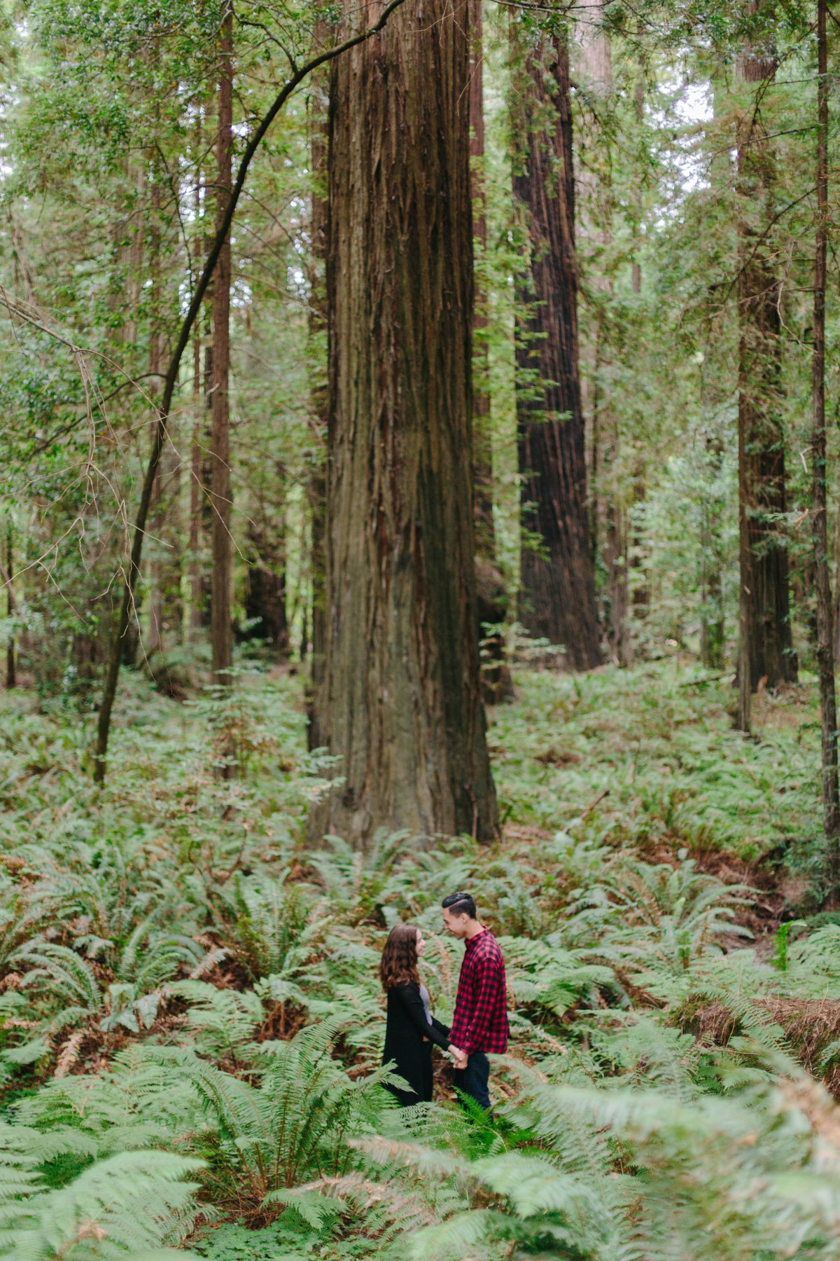 Redwood National Park Avenue of the Giants Engagement Session -7276