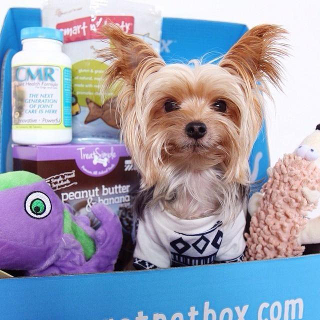 PetBox_Packaging_WillieCute_2
