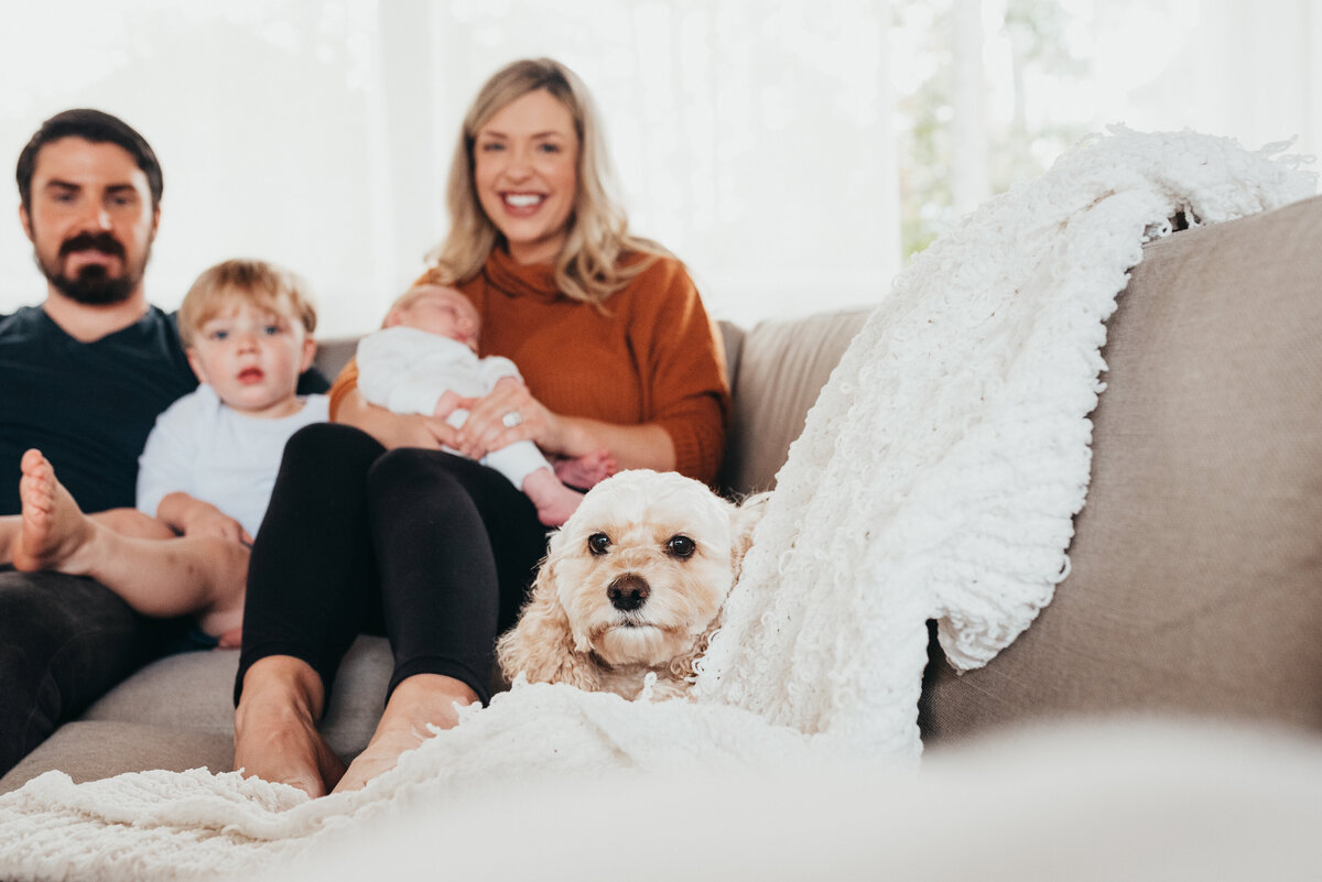 Dog in front of newborn baby and family