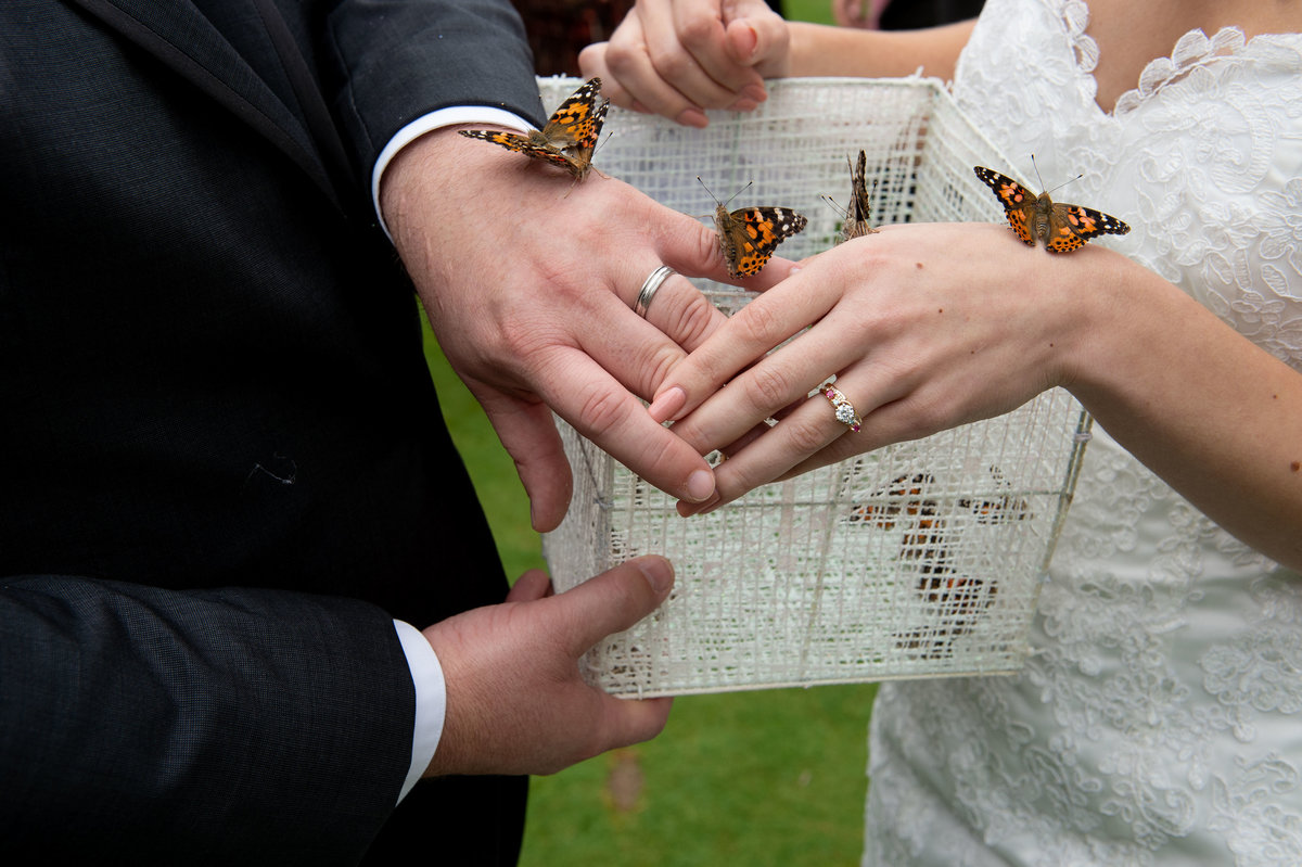 butterflies land on hands of bride and groom
