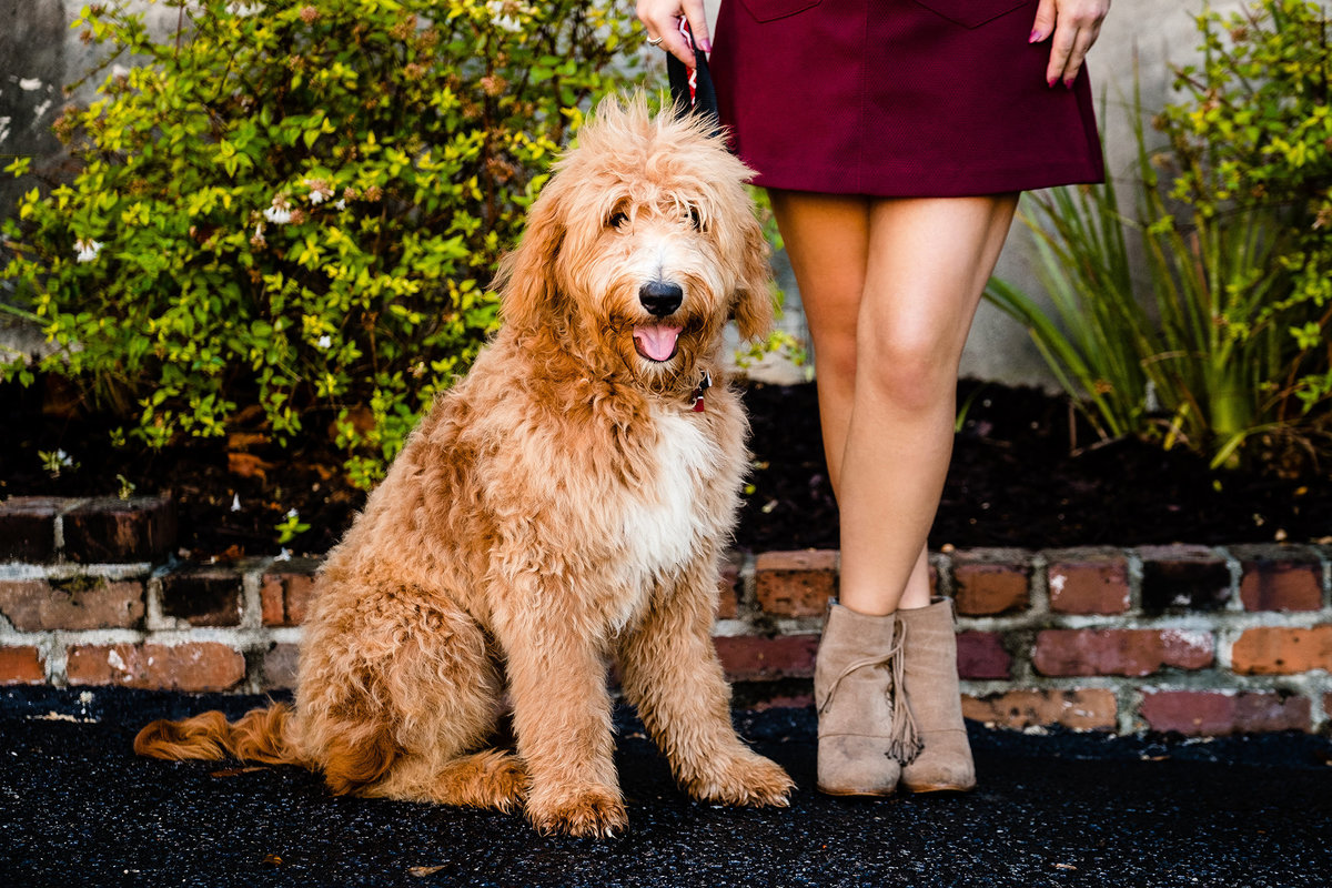 Best Pet Portrait Photography in Charleston SC by King and Fields Studios Charleston SC