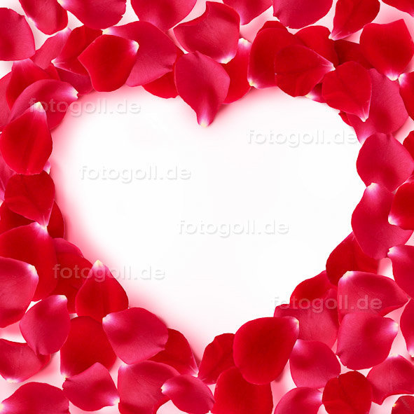 FOTO GOLL - HEART CANVASES - 20120119 - Rosy Heart_Square