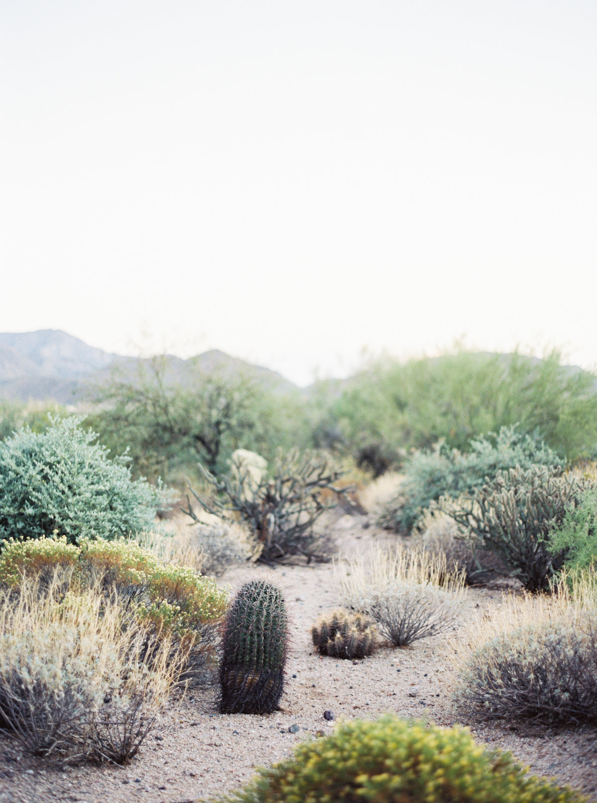 Sassi Scottsdale Arizona Wedding - Mary Claire Photography-31