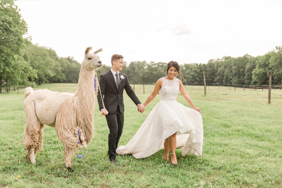 Llama Farm Wedding   Jocelyn Cruz Photography-27